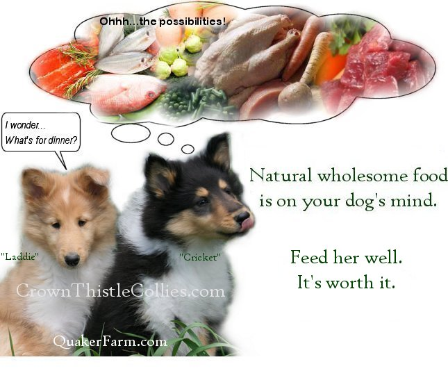 Quaker Farm natural dog food that Collies and all dogs like.  Natural food is better than commercially processed dog food.