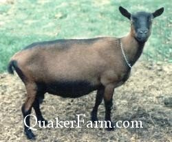 Quaker Farm Dairy Goat Shares, Michigan