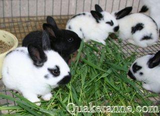 Quaker Hill Farm, Quaker Anne's Children's Stories, baby bunny