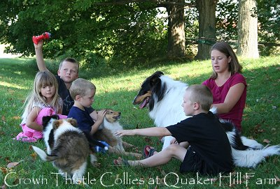 Children playing with Collie puppies at Quaker Hill Farm for Dogs 101