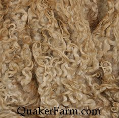 Raw Cotswold fleece, hand selected before washing